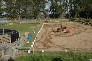 Arena and roundpen