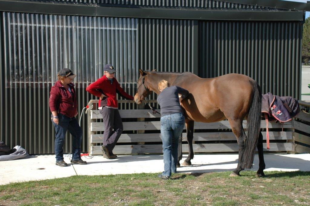 Equine Touch Workshop