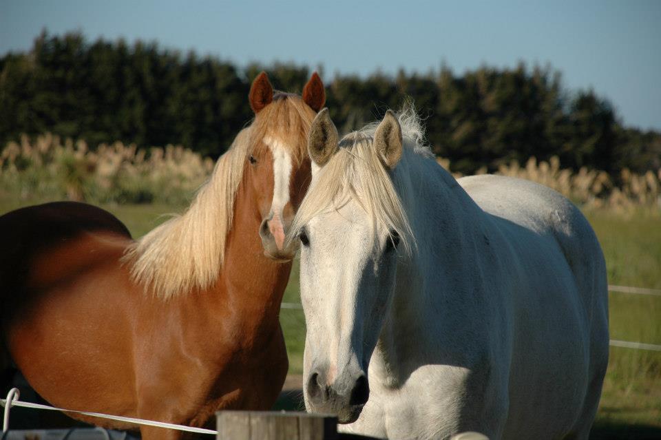 Flying Horse Ltd Animals As Healers